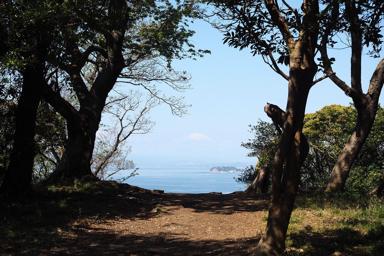 桜山からの海
