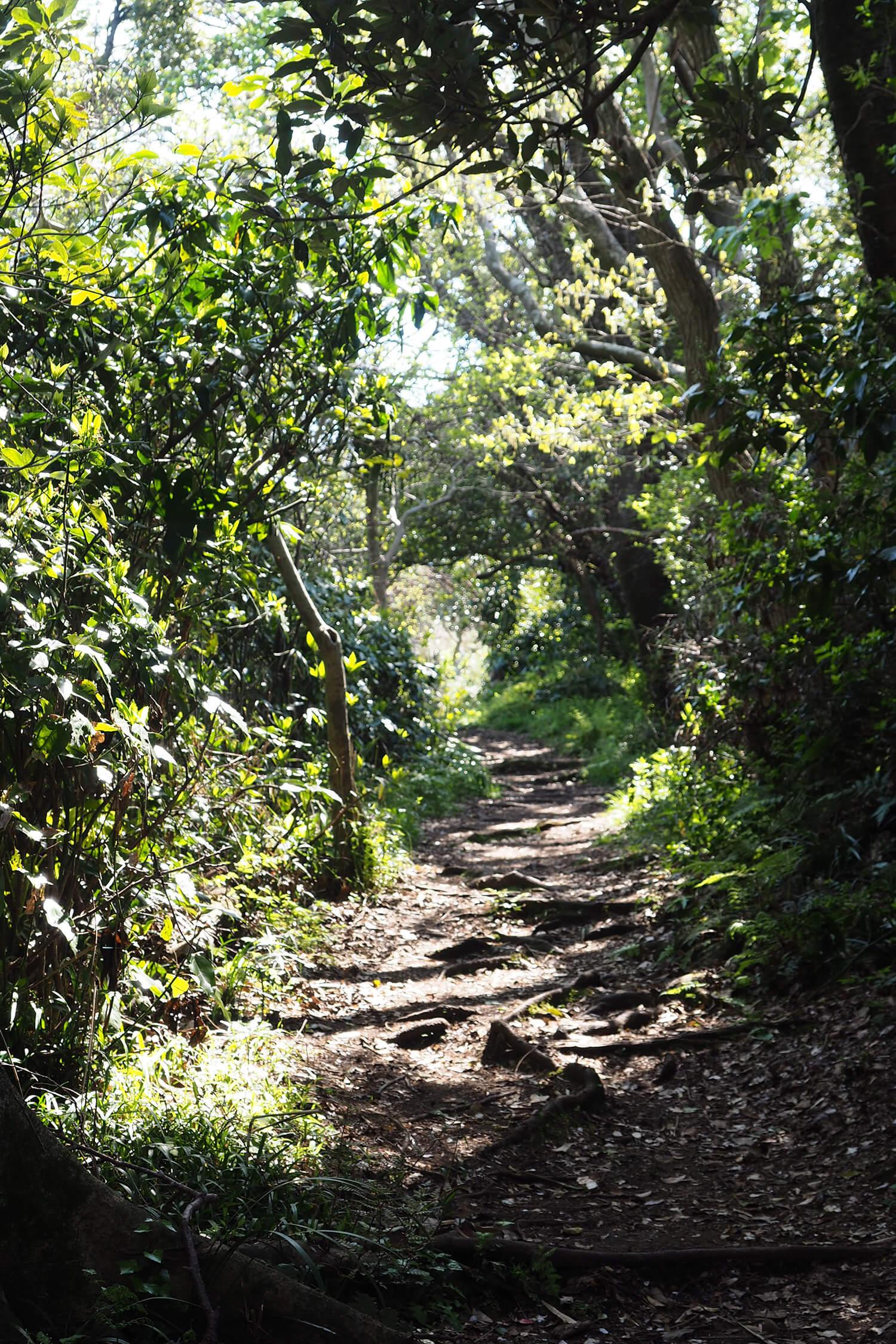 木々のトンネル