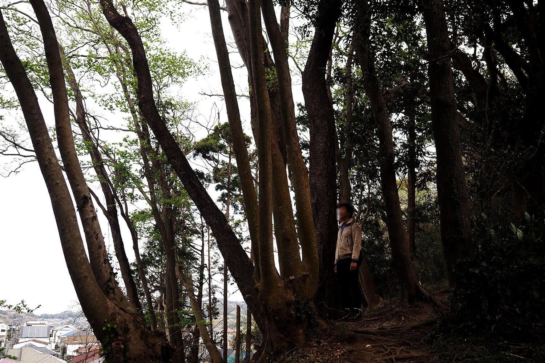 桜山団地と森
